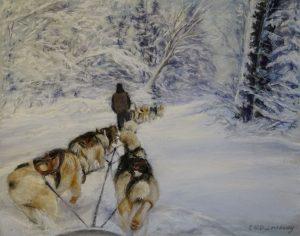 Dog sledding in Algonquin Park Ontario